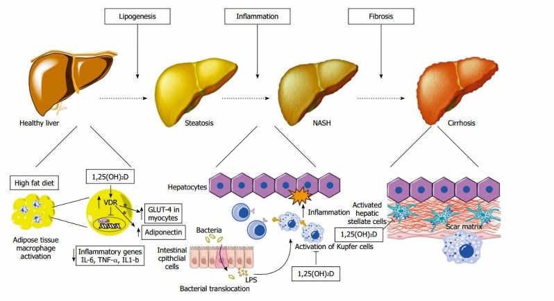 IMM#124 IMM#124 The immune and inflammatory response to liver cell damage is mediated through a well described signaling network of liver and immune cells.