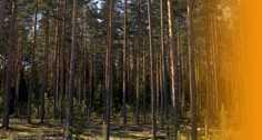 sustainability in Russian wood supply To