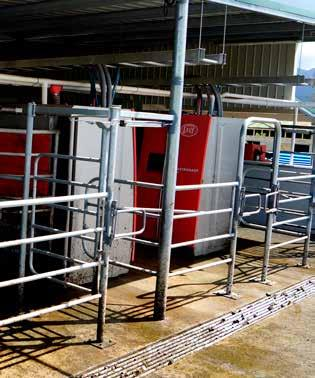 Due to the milking system working 24/7 the Weal s can schedule their dairy routines on their terms.