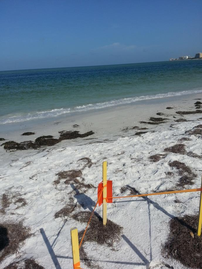 Florida Beaches Habitat Conservation Plan Multiagency effort - DEP, FWC, USFWS, & other stakeholders- Annual USFWS grant under Section 6 of ESA One of the nation s largest & most comprehensive,