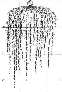 Compare plant adaptations in grassland CROP ROOTS Shallow, lead