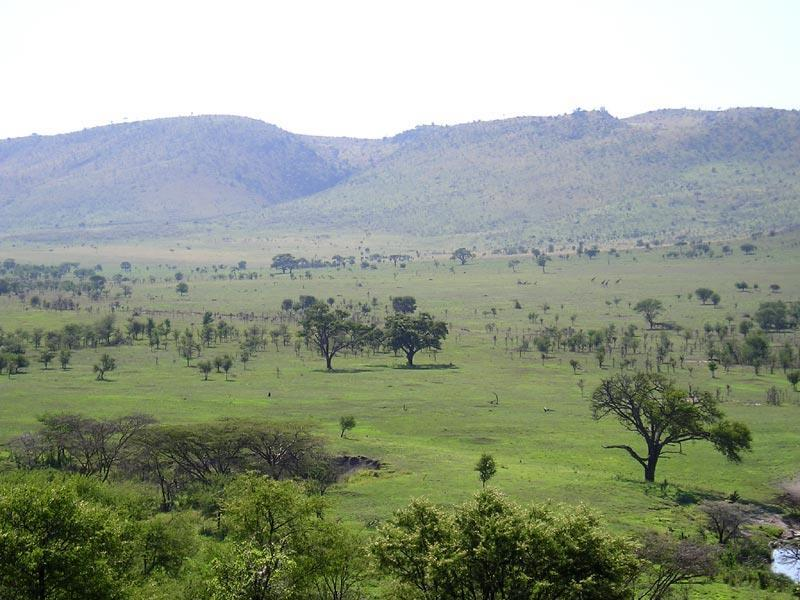 TROPICAL SAVANNAS Most of Africa,