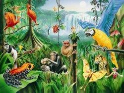 TROPICAL RAINFOREST Located around equator- most biodiverse place on planet.
