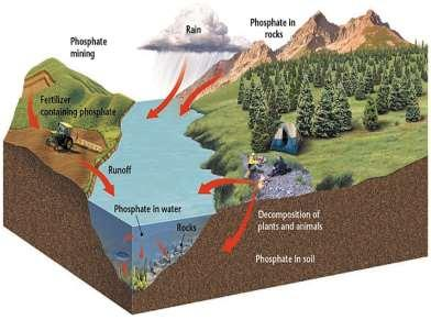 The Phosphorus Cycle is an element that is part of many molecules that make up the cells of living organisms.