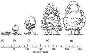 Section 3: How Ecosystems Change Ecological Succession Ecosystems are constantly changing. is a gradual process of change and replacement of the types of species in a community.