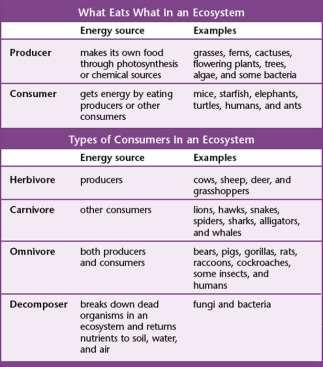 What Eats What? Organisms can be classified by what they eat. Types of Consumers: Herbivores - Carnivores Omnivores Decomposers What Eats What?