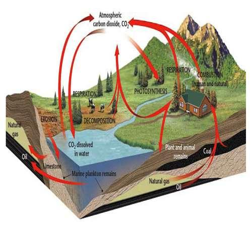 Section 2: The Cycling of Materials The Carbon Cycle The is the movement of carbon from the nonliving environment into living things and back Carbon is the essential component of which make up all