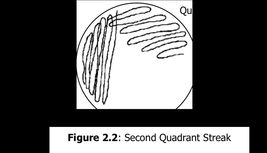 Use the culturette to inoculate the first quadrant in an isolation streak plate on TSY agar. (See Figure 7.1) 3.