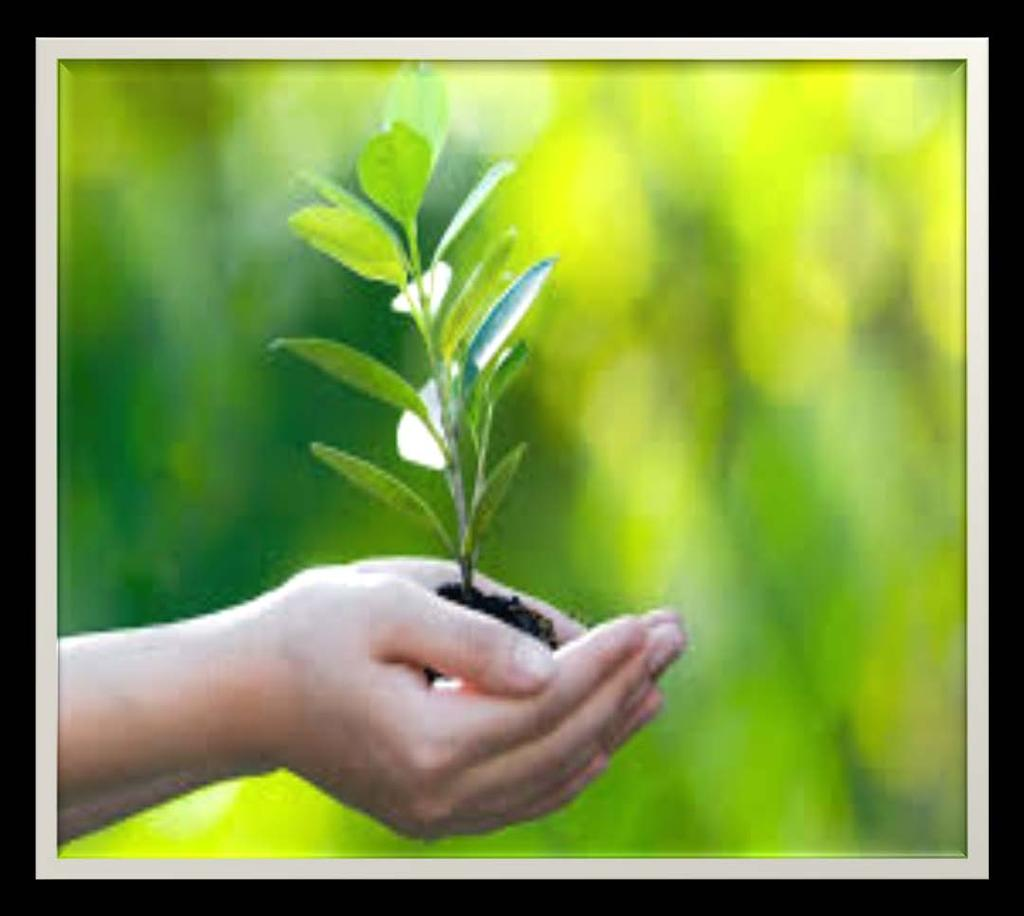 SHARP Bio-diversity activities Social activities Tree plantation was done on World