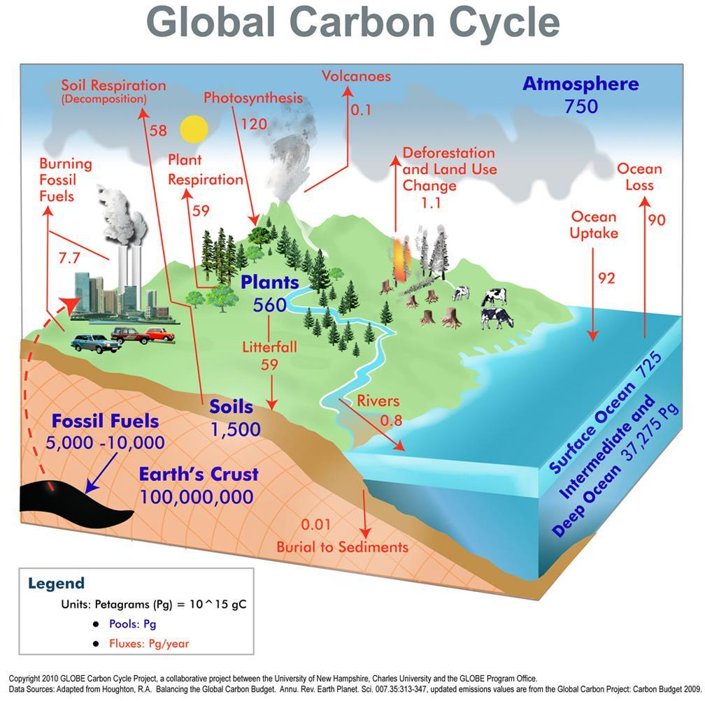 Factors that can Affect Carbon Balancing Reforestation (Boreal) No-till agriculture (energy and reduced soil erosion)