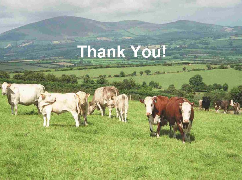 Thank You Questions Irish Cattle