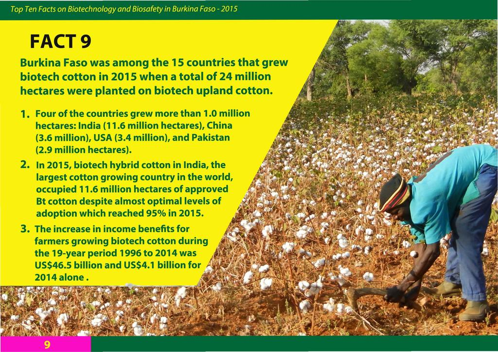 FACT 9 Burkina Faso was among the 15 countries that grew biotech cotton in 2015 when a total of 24 million hectares were planted on biotech upland cotton. 1. Four of the countries grew more than 1.