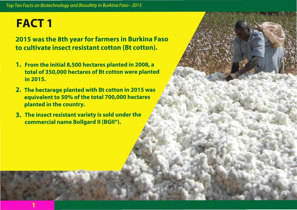 FACT 1 2015 was the 8th year for farmers in Burkina Faso to cultivate insect resistant cotton (Bt cotton). 1. From the initial 8,500 hectares planted in 2008, a total of 350,000 hectares of Bt cotton were planted in 2015.