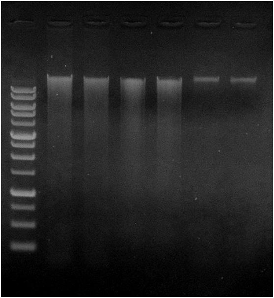 M = Geneaid 1 Kb DNA Ladder, Lane 1-2: Geneaid Presto TM Soil DNA Extraction Kit, Lane 3-4: Brand M, Lane 5-6: Brand E Product Yield (µg) 260/280 260/230 Geneaid 2.2 1.82 1.89 2.0 1.83 1.91 Brand M 2.