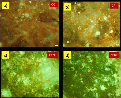 The micrographs showed that control specimens had more orange fluorescence indicating more bacterial attachment on the surface compared to modified mortar specimens.