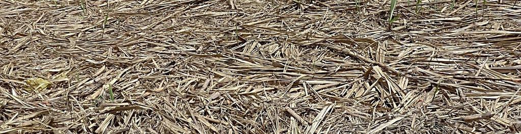 Wheat straw DSM cellulase enzyme cocktail properties: Fast liquefaction Acidic
