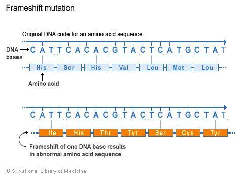 Mutations can lead to missing or malformed proteins, and