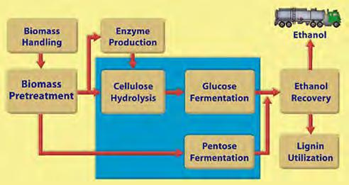 Fermentation Based Cellulosic Ethanol Process Pretreatment phase, to make the lignocellulosic material such as wood or straw amenable to hydrolysis Cellulose hydrolysis (cellulolysis), to break down