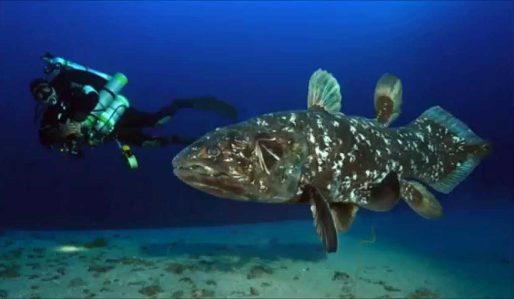Coelacanth, ancient fish live in Northern