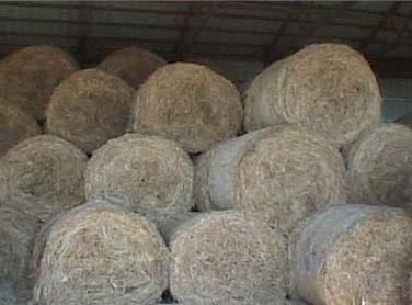 Organic Forage Trend Washington State 35, Acres 3, 25, 2, 15, 1, Alfalfa Hay Other Hay (inc.