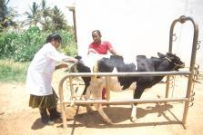 Village Based Milk Procurement System Strengthening and Expanding Milk