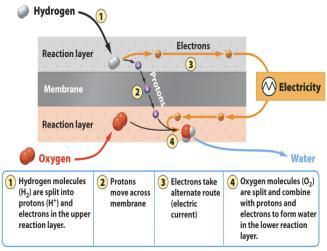 Hydrogen Fuel Cells Not a SOURCE of energy but a METHOD OF STORAGE (like a battery) OTHER SOURCE must separate Hydrogen in to H