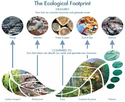 What is Ecological Footprint?