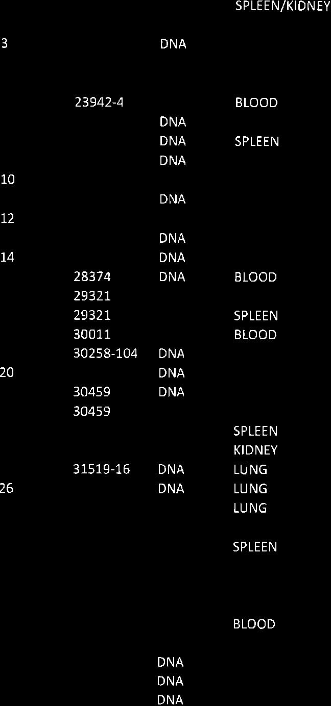 The virus was isolated in PBM cells after three passages from the wild boar identified as23947-2 (spleen, lung), 246t2 (spleen) belonging both to @, 23943 (spleen, gg), 25744 (bone marrow, case 19),