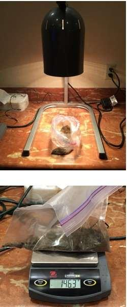 Drying Soil Samples using a heat lamp If using heat lamps to dry the sample transfer all the soil sample to a clear plastic bag and label the bag Dry the sample under the lights for