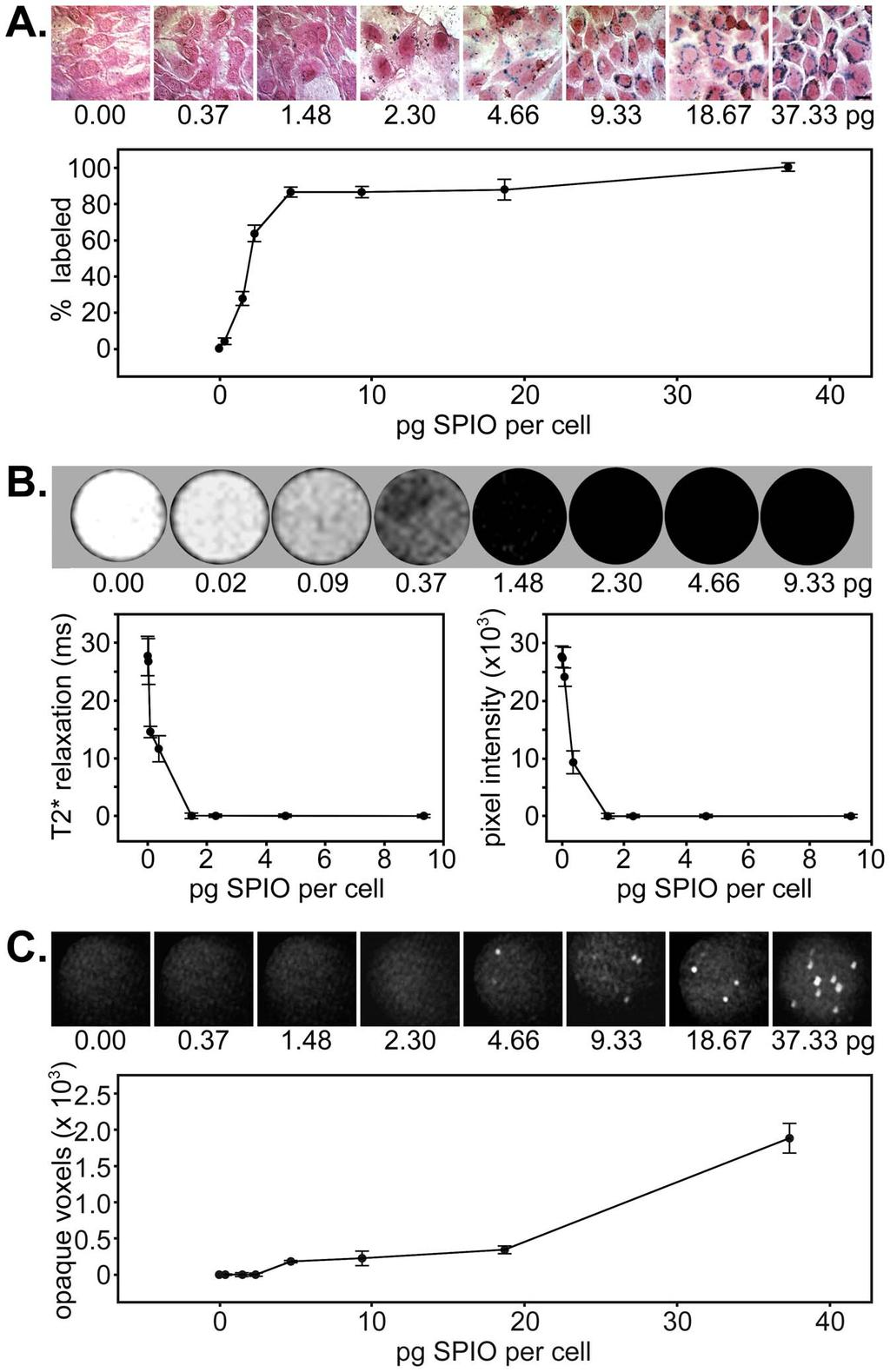 Figure 1. In vitro detection of SPIO nanoparticle-labeled muscle progenitor cells by histology, MRI, and mct.