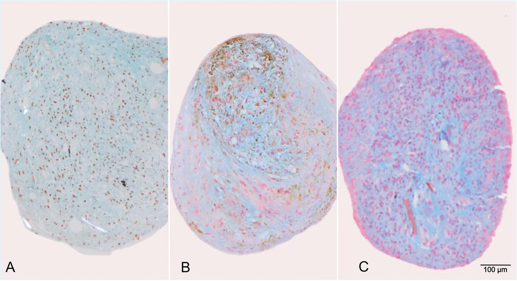 Kolecka et al. BMC Veterinary Research (2017) 13:62 Page 8 of 11 Fig. 7 Alcian blue staining shows blue stained proteoglycans of the cartilage matrix.