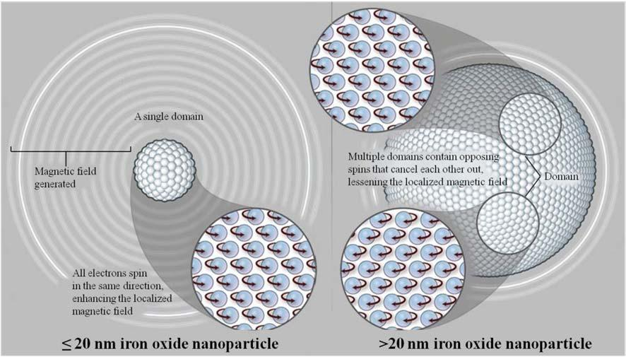 1.3. Magnetic nanoparticles 11 Figure 1.4: Size dependent magnetic properties of magnetic nanoparticles [2]. 1.3.1 Superparamagnetic iron oxide nanoparticles Iron oxide nanoparticles (IONPs) of sizes
