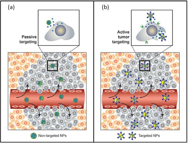 1.4. Hurdles in nanomaterials design for successful biomedical applications 21 co-administration of an adjuvant in addition to nanomaterial injections.
