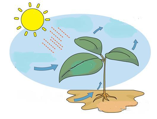 XIV. Label the following diagram for the process of photosynthesis.