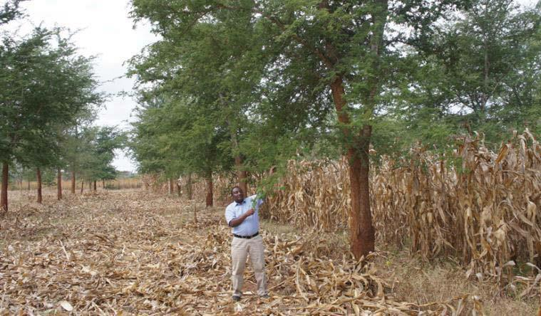 Conservation agriculture with reduced tillage and trees