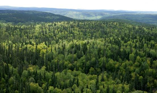 Northern Ontario Bioeconomy Strategy Sustainable Supply Bioenergy & Biofuels