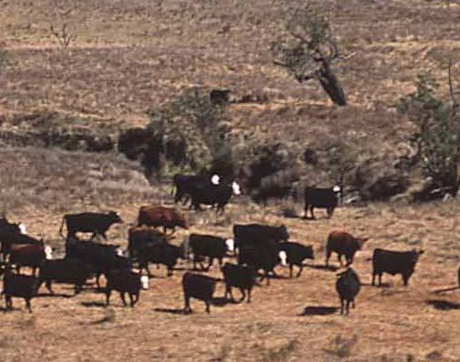 Distance to Water Sheep and cattle can forage up to 3 miles from water points Animals that need to drink more than once a day cannot forage as