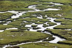 Bogs Bogs: These are wetlands that are dominated by, mosses usually