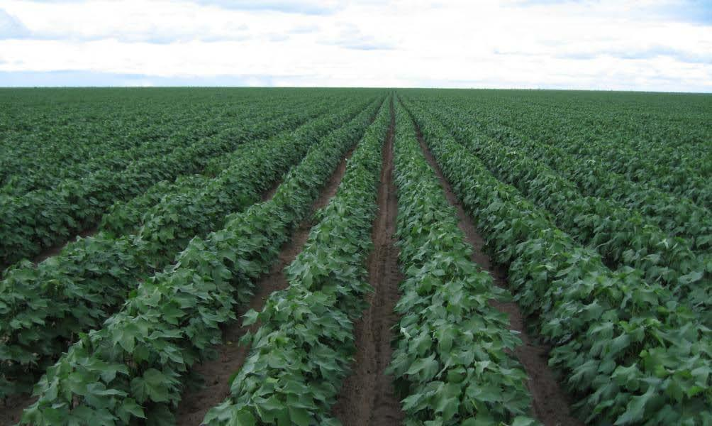 Such analysis will reveal the results of the social and environmental benefits obtained as a result of the adoption of GM cotton, GM corn and herbicide- tolerant soybeans.