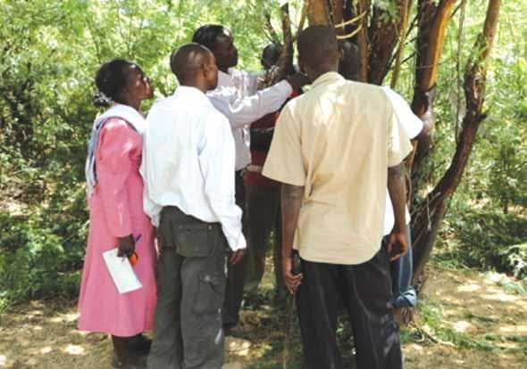 Tree resource survey in Baringo County 3.2.