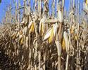 9 Cellulosic Ethanol Technology ptions
