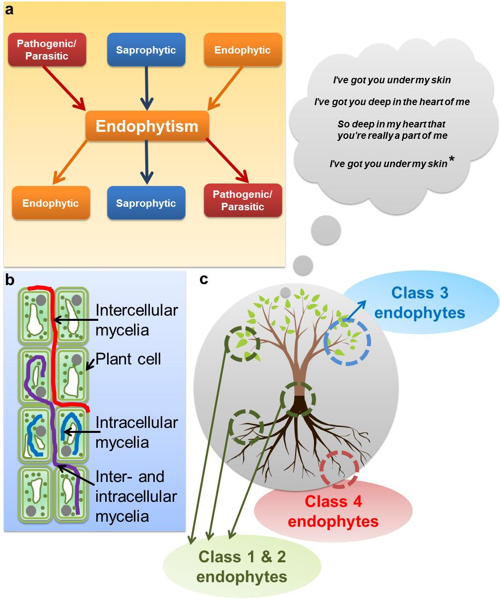 Metabolomics of Endophytic Fungi Producing Associated Plant Secondary Metabolites: Progress, Challenges and pportunities 24