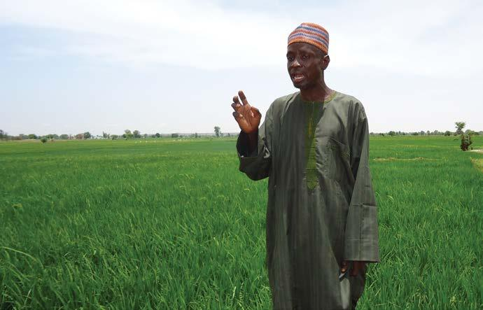 Figure 18: A rice farmer in Jega, Sokoto state shows off his rice fields In the words of Dan Rabi, a local entrepreneur who provides mobile threshing services for rice farmers, We have never seen