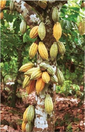 i Brand Nigerian cocoa by implementing quality control and traceability systems iv.