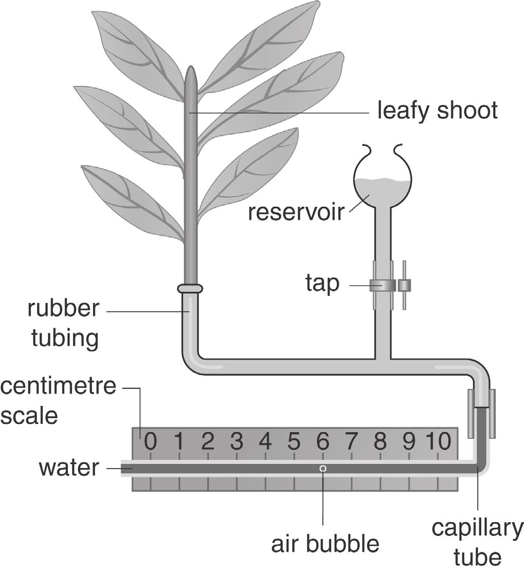 12 Figure 12.1 shows the apparatus that a student used to investigate transpiration. Figure 12.1 Table 12.1 shows the student s results.