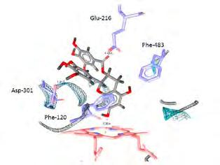 Medical Biochemistry MvaL4, respectively, binds preferentially to its binding site on the 23S rrna, and, when in excess, binds with lower affinity to its regulatory binding site on its mrna (in the