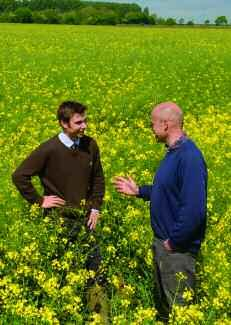 Picto Perfect? Conventional OSR candidate Picto is setting the pace for yield in the race for recommendation and Frontier have fast-tracked the variety for sale this autumn. CPM gets the inside view.