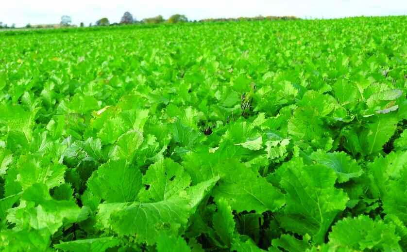 Tech Talk: Cover crops Growers are increasingly discovering the benefits of cover crops.
