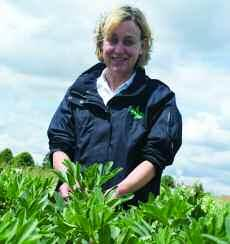 Robert Brown finds peas allow a long rotation for potatoes, provide an excellent entry to wheat and another opportunity to lower blackgrass populations.