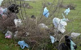 Background Single Use Plastic Bags Create litter in trees, wetlands, and waterways Clog storm drains Require use of public funds